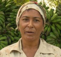 Incrementan las producciones agrícolas en Bayamo con el polo productivo Cautillo Bejuquero