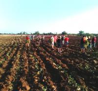 Trabajadores del Joven Club Campechuela 1 participan en trabajo voluntario en saludo al 1ro de Mayo.