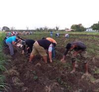 Trabajadores de Joven Club en Campechuela contribuyen a la producción de alimentos.